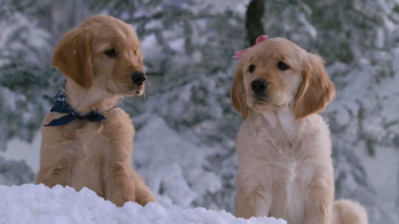 25 Days of Christmas - This Video Of Adorable Puppies Playing In The Snow Will Melt Your Heart!  - Thumb