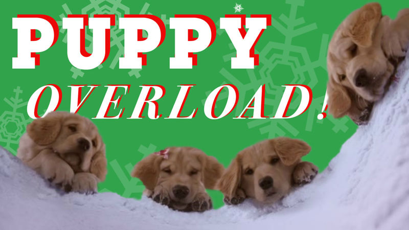 25 Days of Christmas - 25 GIFs Of Christmas Puppies Guaranteed To Make You Smile! - Thumb