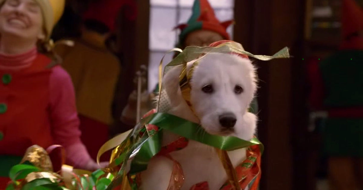 25 Days of Christmas - 11 Things Your Pets Are Probably Thinking At Christmas - 1010