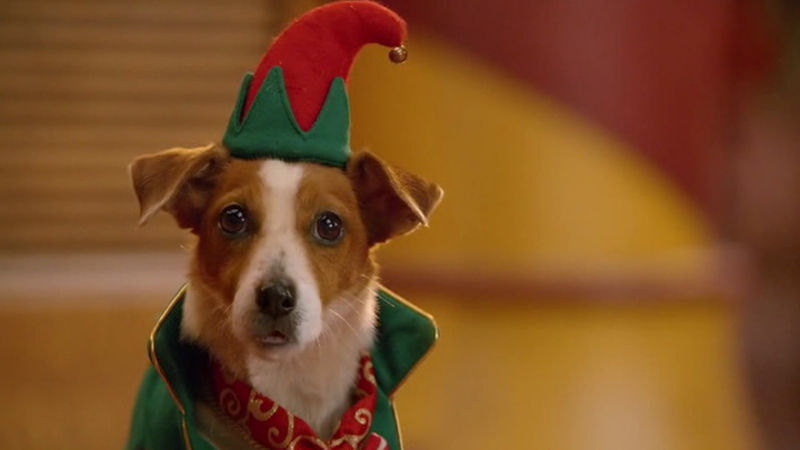 25 Days of Christmas - 11 Things Your Pets Are Probably Thinking At Christmas - Thumb