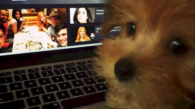 Shadowhunters - Everybody Want to See An Adorable Little Dog? - Thumb